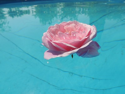 pink rose blossom in blue water, sacred symbols