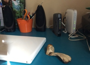 Turtle bone sitting on a turquoise colored desk with other office paraphernalia.
