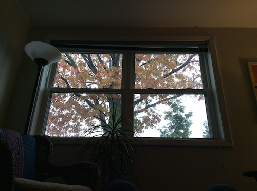 looking out the window in my office on a Fall day