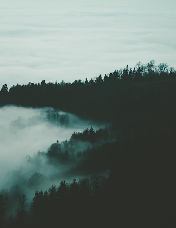 dark-forest-mystic
