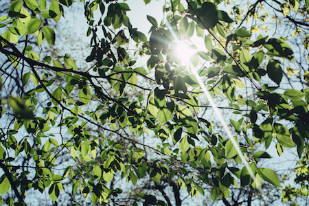 sunlight-tree-leaves