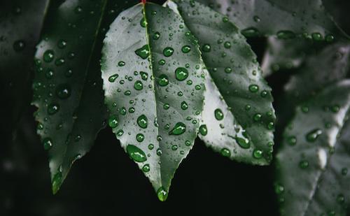 sensual-rain-leaf